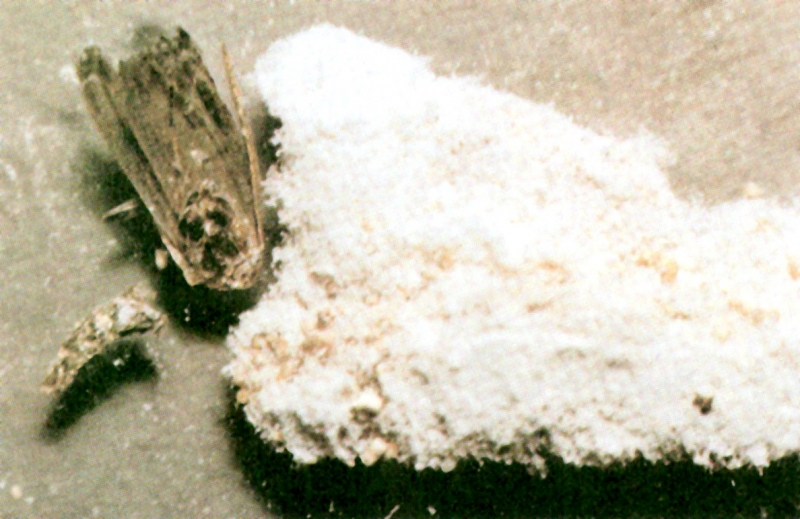 flour moth atlas of foodborne infections transmitted by contaminated food and